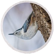 Hanging Nuthatch Round Beach Towel