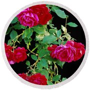 Hanging Roses 2593 Round Beach Towel