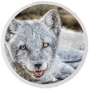 Happy Arctic Fox Round Beach Towel