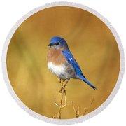 Happy Blue Bird Round Beach Towel