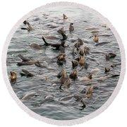 Happy Harbour Seals Round Beach Towel