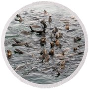Happy Harbour Seals Round Beach Towel