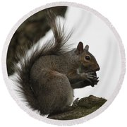 Happy Squirrel Round Beach Towel