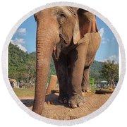 Happy Thai Elephant In Chiang Mai Round Beach Towel