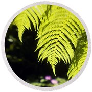 Hapuu Ferns Round Beach Towel