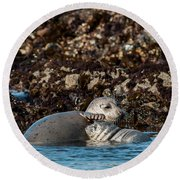 Harbor Seal And Pup Round Beach Towel