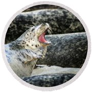 Harbor Seal Round Beach Towel