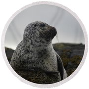 Harbor Seal In Stormy Weather Round Beach Towel