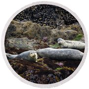 Harbor Seals Basking - Oregon Coast Round Beach Towel