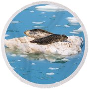 Harbor Seals On Clouds Of Ice Round Beach Towel