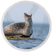 Harbour Seal Round Beach Towel