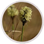 Hare's-tail Cottongrass 1 Round Beach Towel