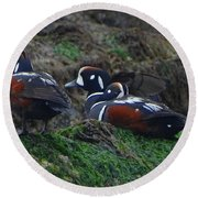 Harlequin Ducks  Round Beach Towel