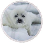 Harp Seal Pup Round Beach Towel