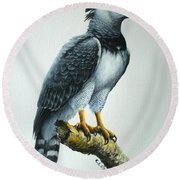 Harpy Eagle Round Beach Towel