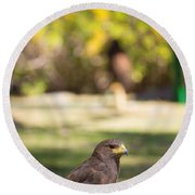Harris Hawk Looking At Infinity Round Beach Towel