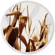 Harvest Corn Stalks - Gold Round Beach Towel