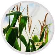 Harvest Corn Stalks Round Beach Towel