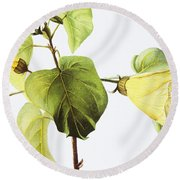 Hau Plant Art Round Beach Towel