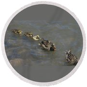Having Your Duckies In A Row  Round Beach Towel