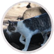 Hawaiian Feral Cat 2 Round Beach Towel