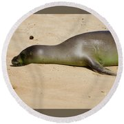Hawaiian Monk Seal Round Beach Towel