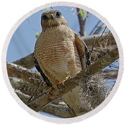 Hawk Gawk Round Beach Towel