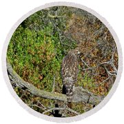 Hawk In Hiding Round Beach Towel