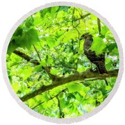 Hawk In Sycamore Round Beach Towel