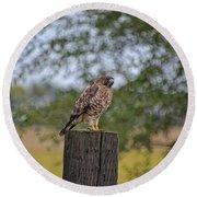 Hawk On A Fence Post Round Beach Towel