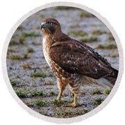 Hawk On A Walk Round Beach Towel