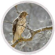 Hawk On Lookout Round Beach Towel by George Randy Bass
