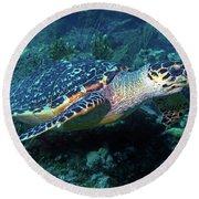 Hawksbill Sea Turtle 3 Round Beach Towel