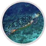 Hawksbill Sea Turtle 5 Round Beach Towel