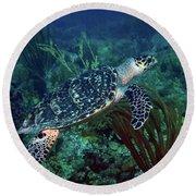 Hawksbill Sea Turtle 7 Round Beach Towel