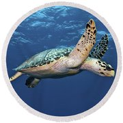Hawksbill Sea Turtle In Mid-water Round Beach Towel