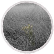 Hay Daisy In The Fog Round Beach Towel