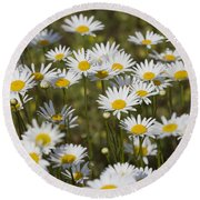 He Loves Me Daisies Round Beach Towel