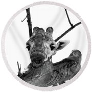 Head In The Trees Round Beach Towel