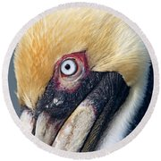 Headshot Brown Pelican Round Beach Towel