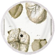 Heart And Muscle Fibers, 18th Century Round Beach Towel