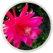 Heavenly Epiphyllum Orchid Cactus Round Beach Towel