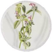 Hedge Calamint  Round Beach Towel
