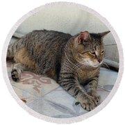 Hemingway Polydactyl Cat Round Beach Towel