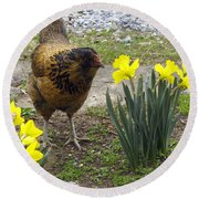 Hen And Daffodils Round Beach Towel