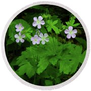 Herb Robert On The Ma At Round Beach Towel