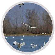 Here Come The Swans Round Beach Towel