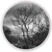 Hermit Island Tree 0192 Round Beach Towel