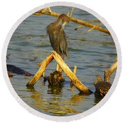Heron And Turtle Round Beach Towel