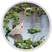 Heron Fishing In The Everglades Round Beach Towel